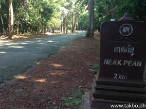 Angkor Wat Marathon 2014 - Trees