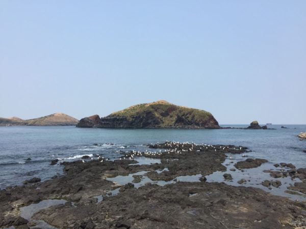 Jeju_Marathon - Rock Island