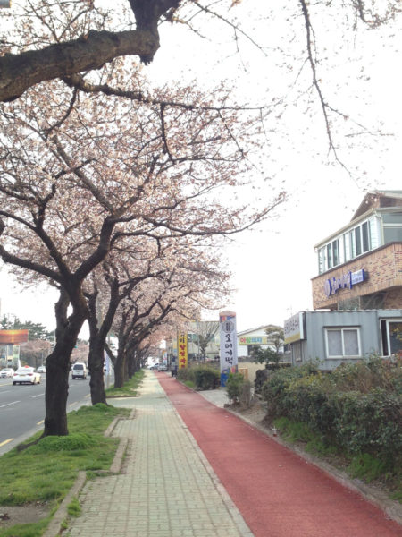 Jeju_Marathon - Streets in Jeju