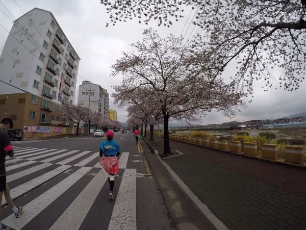 Gyeongju Cherry Blossom Marathon 05