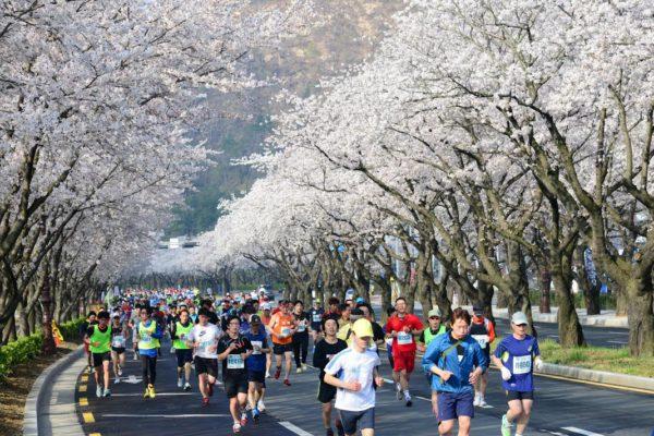Gyeongju Cherry Blossom Marathon Website Photo